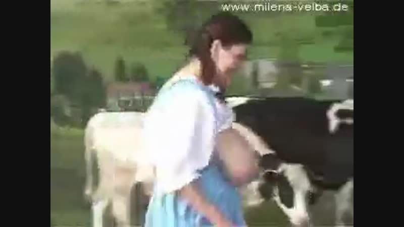 веселая молочница