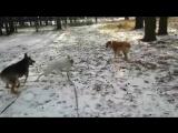 Канск, дрессировка собак, Мохнатые друзья