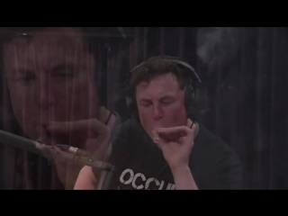 Elon musk smoke weed every day