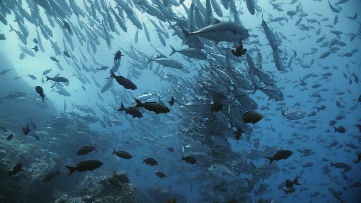 [1] Жители океанов (Царство океанов, Королевство океанов) / Kingdom of the Oceans / Le Peuple des Oceans (2011)