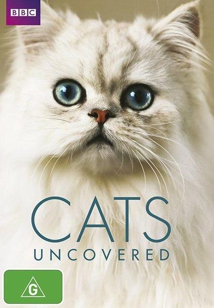 BBC. Кошачьи тайны (2016)