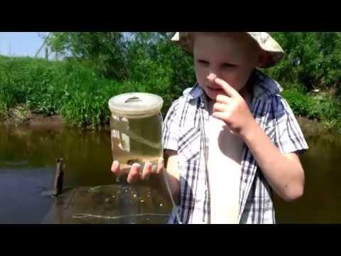 как ловить рыбу банкой