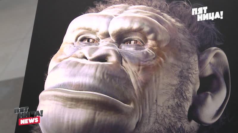 Недостающее звено эволюции человека найдено!