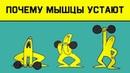 Edu: Почему наши мышцы устают