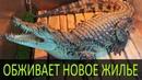 Нильский крокодил по имени Эш обживает обновленный бассейн После ремонта террариума для крокодила