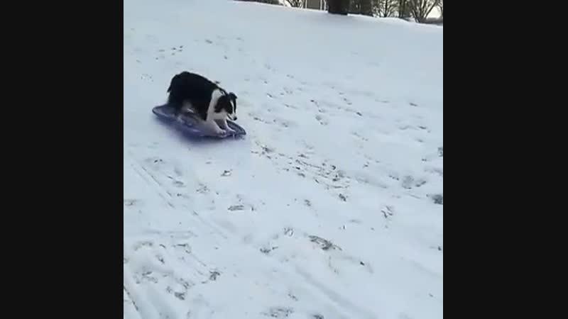 Собака катается на санках с горки