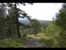 иван-чай Архангельский public164658216 красота природы наших мест