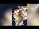 Смешные коты кошки и собачки Funny Cat FUNNY ANIMALS Videos 2018힐링되는 귀여운 고양이와 개 웃긴영상 2018 - 7탄ㅋㅋㅋㅋㅋ