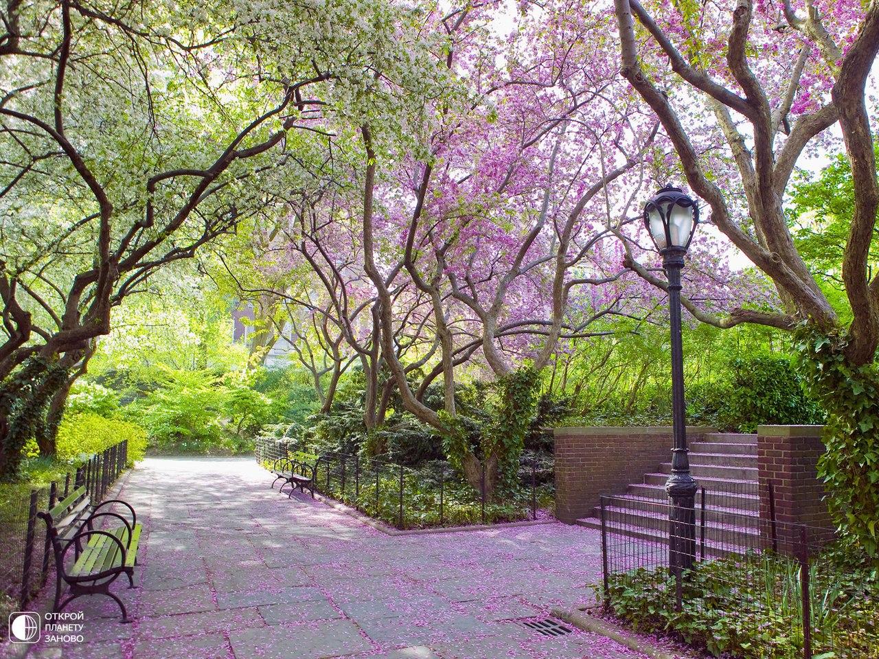 Сказочная весна в Центральном парке Нью-Йорка