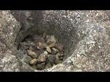 Керчь.Гора Хрони.Античный колодец и склепы.Керченский пролив.