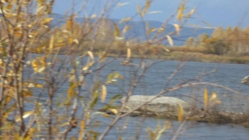 Аргази-осень-чайки
