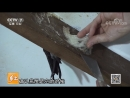 Ласточкины Гнезда ''ЯньВо'' (птичье гнездо), или Гнёзда Стрижей Саланганов, птицы строят их, из собственной затвердевающей белко