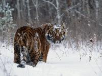 Виктор Евсеев, 30 декабря 1995, Москва, id161076454