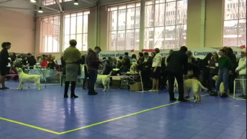 09.12.18 Всероссийская выставка собак ранга САС КФ
