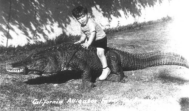 Серия ч/б фотографий 1900-х годов дети верхом на аллигаторах.