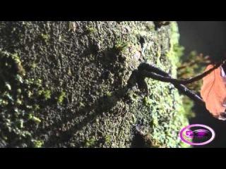 Beautiful Nature Scenery By Vak Karapetian [HD]