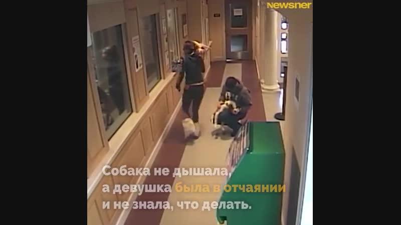 Спасение щенка в полицейском участке