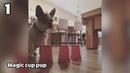 Смешные животные - Смешные анекдоты до слез смотреть видео 2018