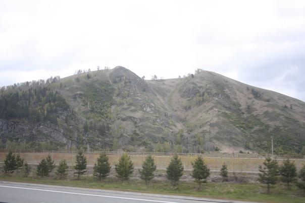 Свежие посадки возле лысой горы.