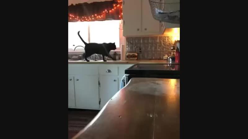Походка кошки грация картошки