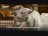 Запашный против зооактивистов и Cirque du Soleil