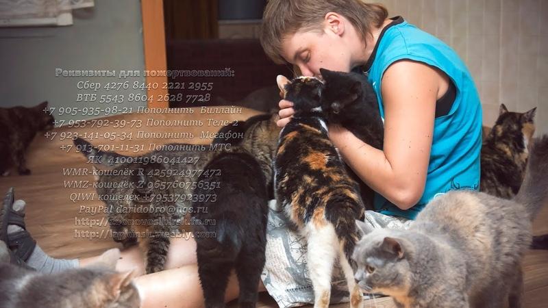 Война безразличию и Неделя сытых животиков Приют для кошек и собак Дари добро