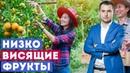 Низко Висящие Фрукты - Михаил Дашкиев