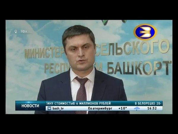 Животноводы Башкортостана обеспокоены низкими закупочными ценами на молоко