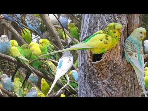 HDR - Majestic Parrot Birds And Nature Documentary