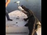Обычный случай на рыбалке в Австралии......