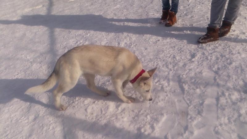 Пёс Тотоша и новые подружки Кенга и Бетти