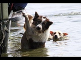 SAVED AND RESCUED DOGS BY BRAVE HUMANS( Hose &amp Irma)