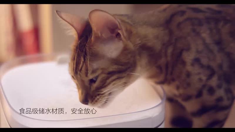 Промо видео дозатора воды для животных Xiaomi Kitten Puppy