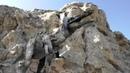 Камышин Горы Уши с доисторическими животными