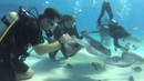 Stingray City- Grand Cayman Dive 2015