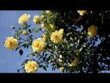 Розы и саксофон. Fausto Papetti - Amado Mio