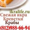 Красная икра, копченая рыба, печень трески в СПб