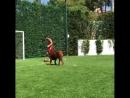 Мессі і захисники клубів Ла Ліги