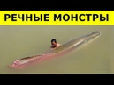 Увидев ЭТИХ МОНСТРОВ, Вы Больше НЕ ПОЛЕЗЕТЕ В РЕКУ