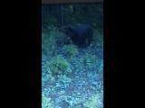 Встретили медвежонка у дороги