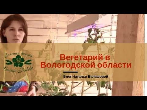 Вегетарий в Вологодской области