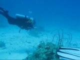 Дайвинг в Красном море.Хургада