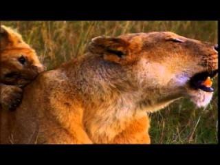 Развивающий фильм для детей про животных! ЛЕВ 6 серия