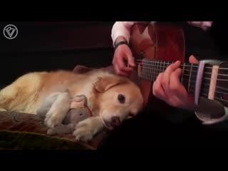 Реакция животных на музыку