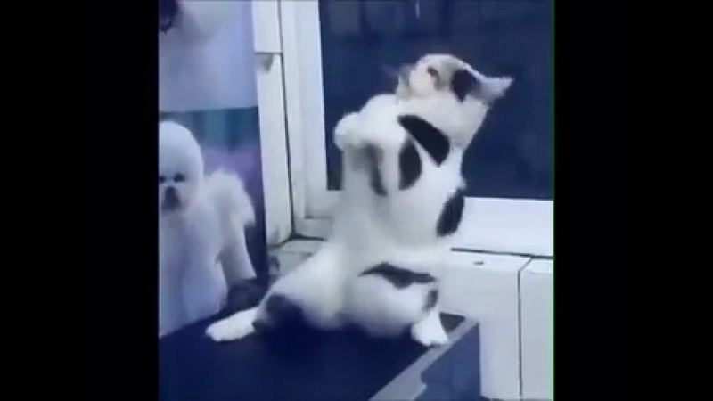 Супер танцор