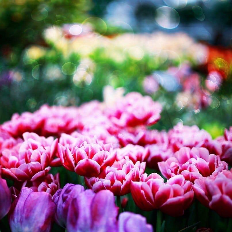 Доброта – это солнце, которое согревает душу человека. Всё хорошее в природе от...