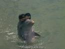 Флиппер ENG SUB - 1 сезон 13 серия Flipper S01 E13 - Lady And The Dolphin Part 2 1964-1965