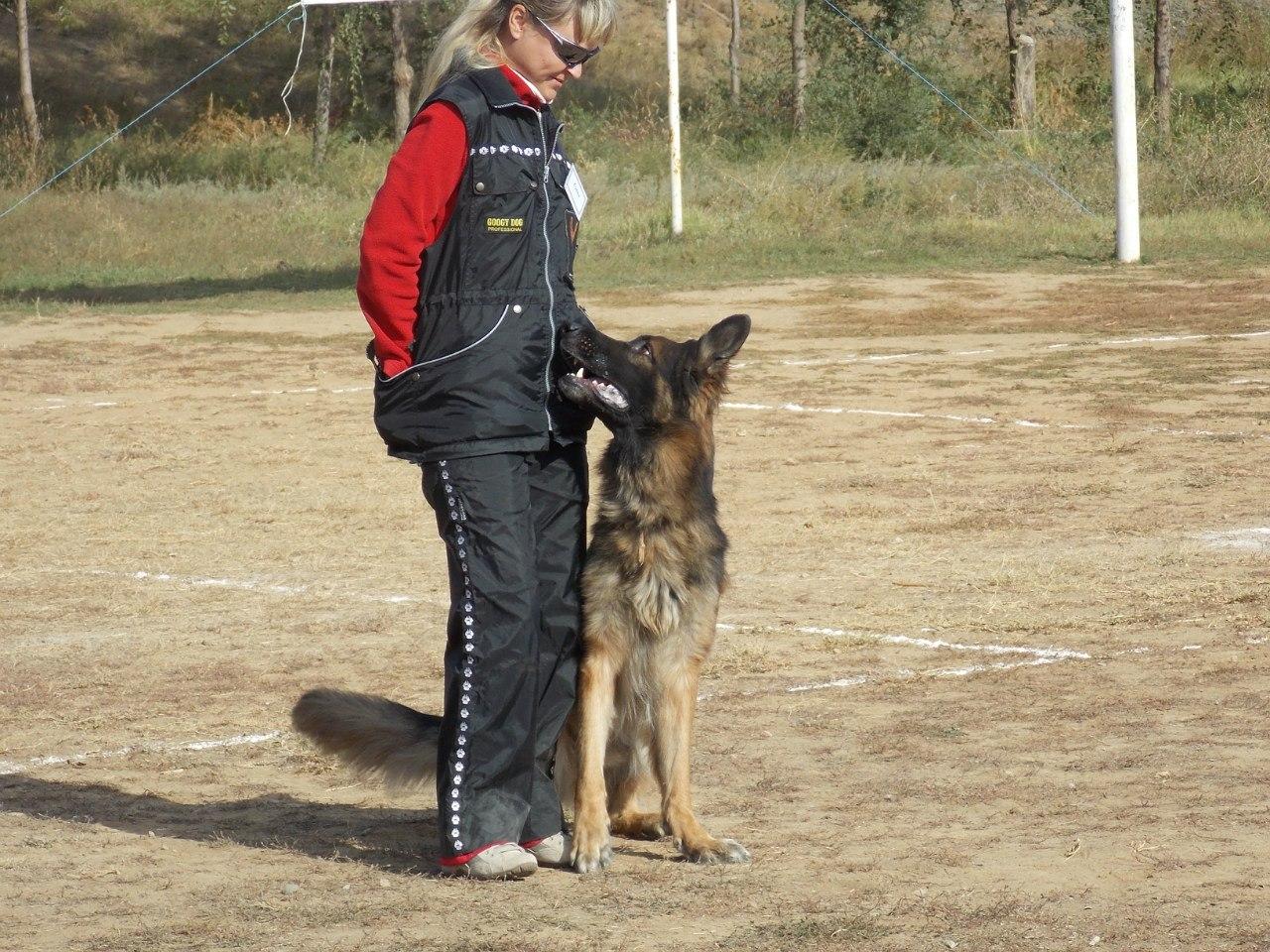 Соревнования собак в Элисте