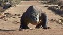 Nat Geo Wild Первая тройка самых опасных животных Голодные игры 1080р