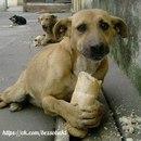 Никогда не жалей куска хлеба для бездомного пса, ведь для тебя этот кусок - ни что…